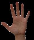ligne de la main